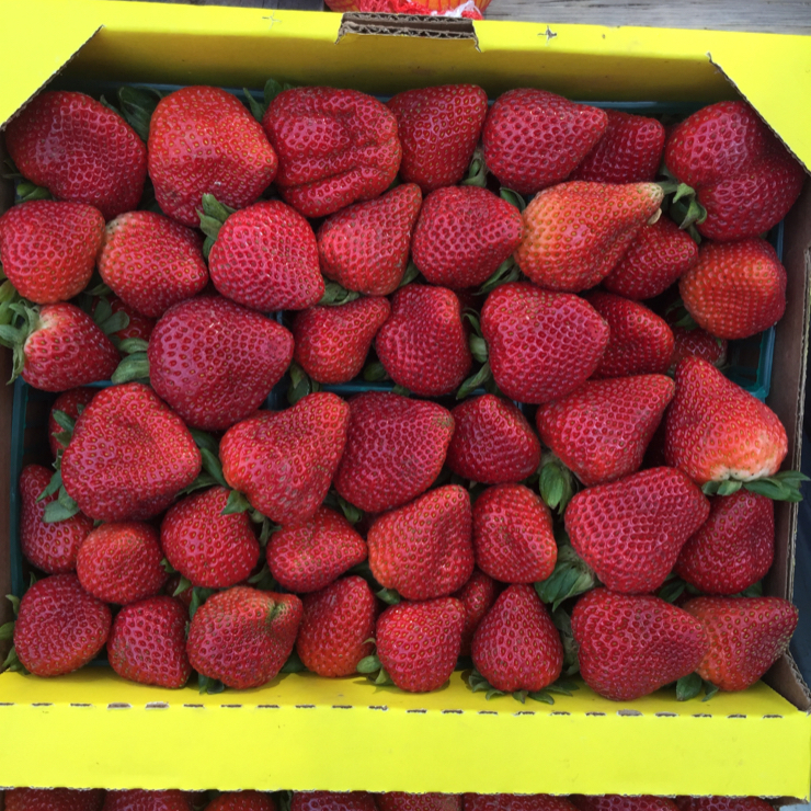 Vegan user review of Fruit Vendor in San Jose. Awesome strawberries from the strawberry-walla in San Jose. #food #breakfast #lunch #dessert #grocery